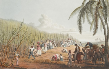 Enslaved Africans_sugar cane_Antigua_1786a